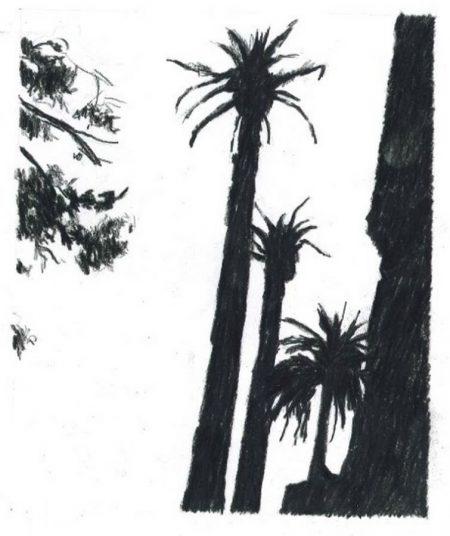 Muro y palmeras