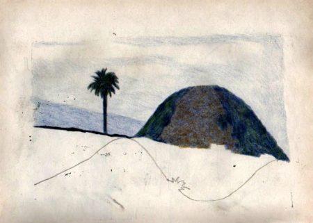 Montannna y palmera