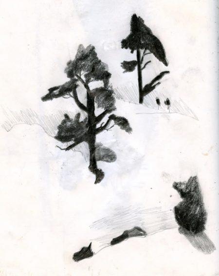 AAArboles y sombras