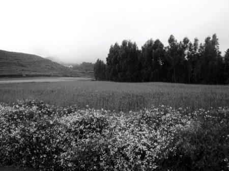 Campo con aaarboles