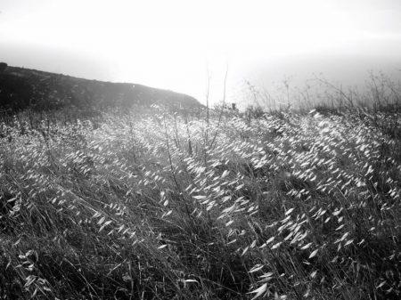 La luz y el campo de trigo
