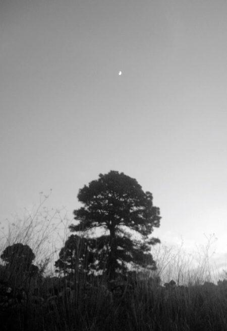 Aaarbol y luna